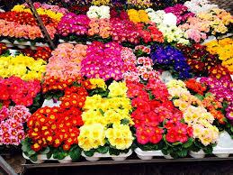 Balconi Fioriti - I fiori