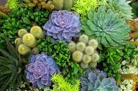 Balconi Fioriti - Le piante grasse